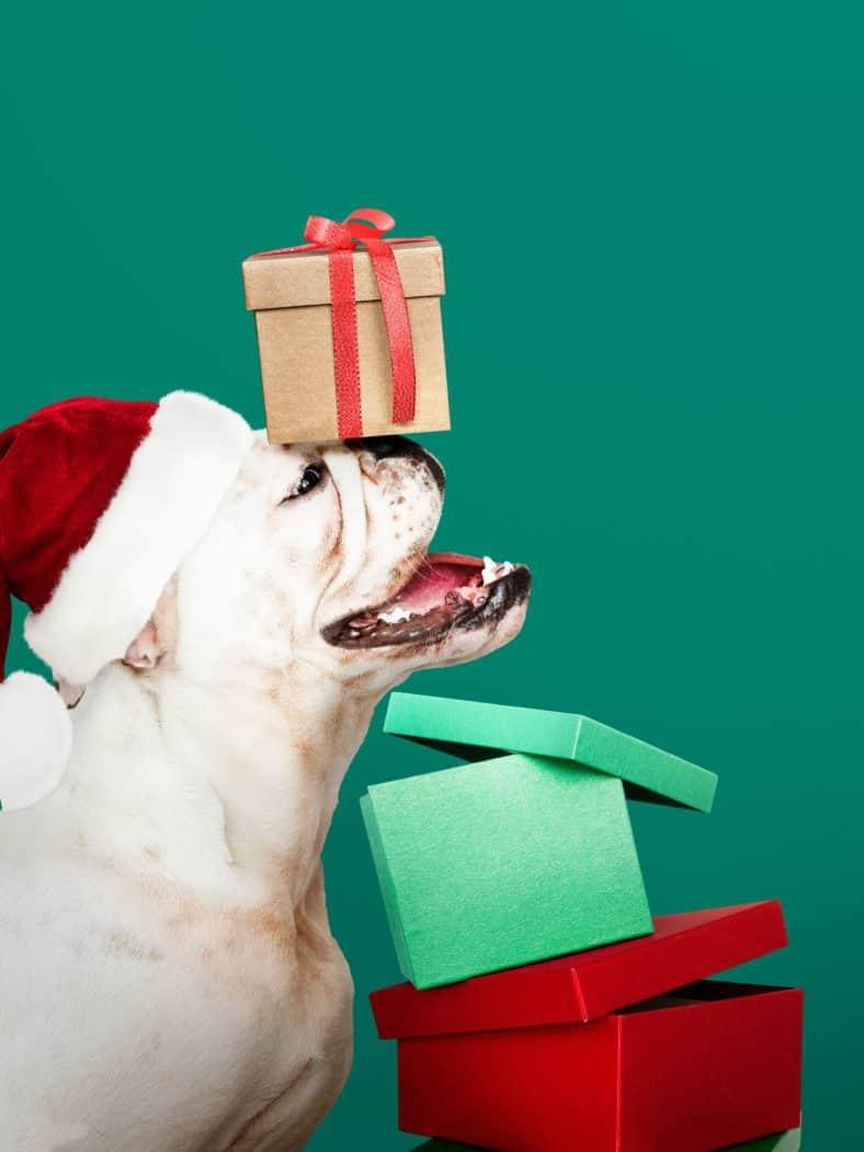 Weihnachtsfeier Regeln.Oh Du Besinnliche Weihnachtsfeier Vorsicht Vor Fehltritten